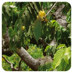 Aeqt Ylang Ylang Perfumar 5ML Pranarom