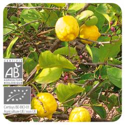 Aeqt Bio Limon 10ML Infecciones Digestion Pranarom